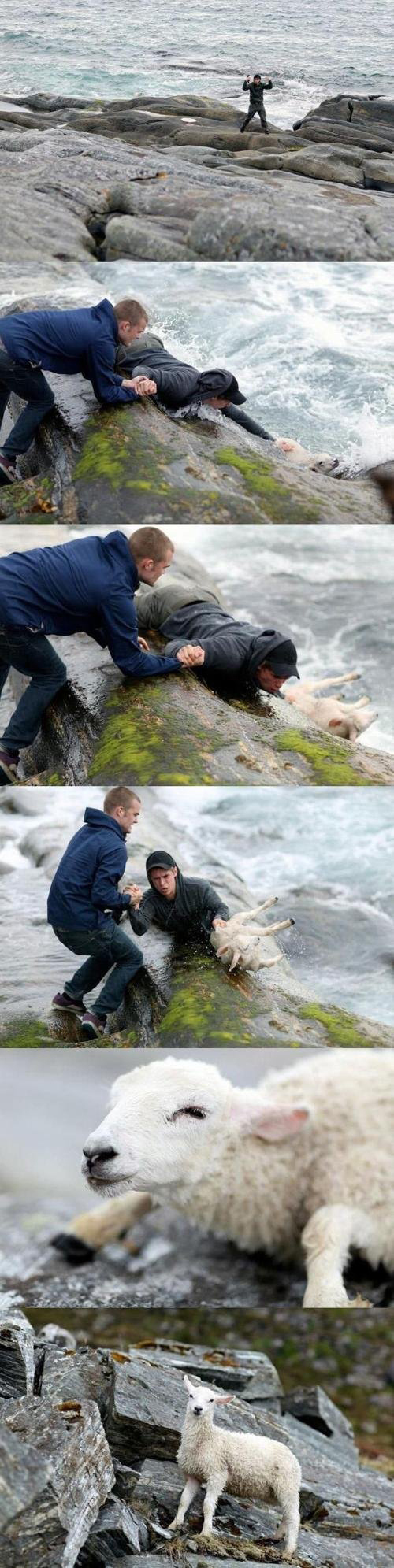 gens sauvant des animaux 3.-This-picture-of-two-Norwegian-guys-rescuing-a-sheep-from-the-ocean