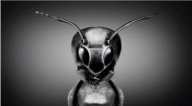 Космическое Раскрытие – 2: Скрытые инопланетные цивилизации. Интервью Джорджа Нури с Эмери Смитом 483_9