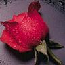 voteaza-EDY-irina elena - Pagina 6 311734wce5yokyx6