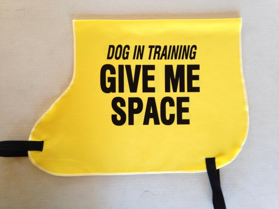 DINOS: le ruban jaune pour les chiens qui ont besoin d'espace  - Page 7 554930_558143920877019_1003397203_n