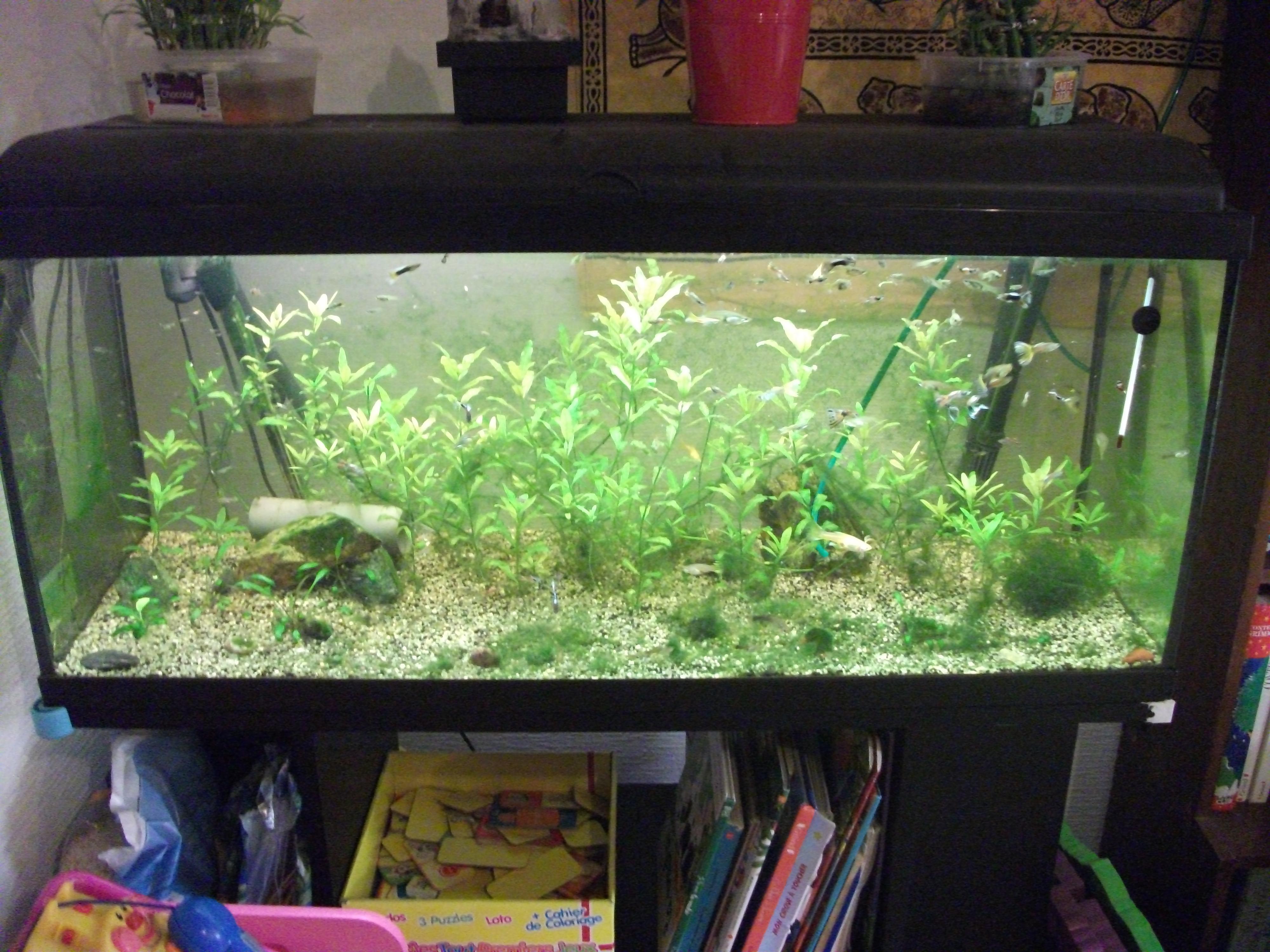 Mon aquarium N°2 - Page 2 DSCF0923