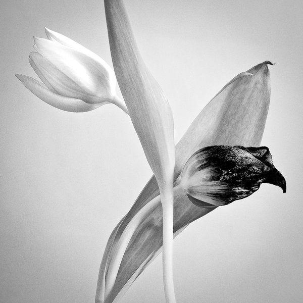 Черно-Белое Фото - Страница 2 1271604970_doseng.org_fantastic_black_and_640_04