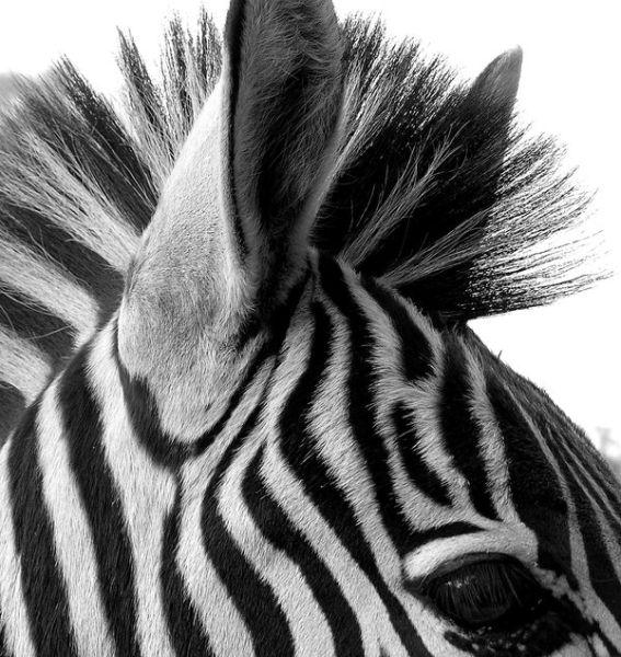 Черно-Белое Фото - Страница 2 1271604974_doseng.org_fantastic_black_and_640_05