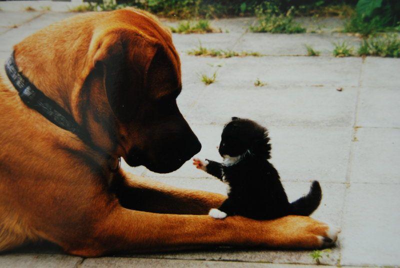 Друзья все понимают - Страница 6 1299702164_these_funny_animals_635_01