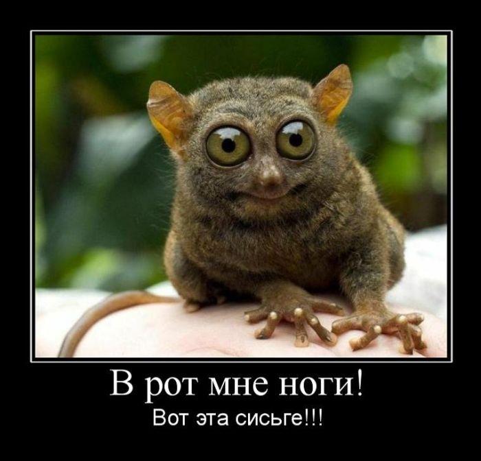 ПозитиФФ...))) 1346295826_020