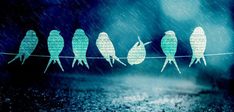 Rain Water: The Ultimate in Healing Birds_Rain_Water-790x381