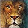 Mettre un lion dans son moteur Af0byrqn