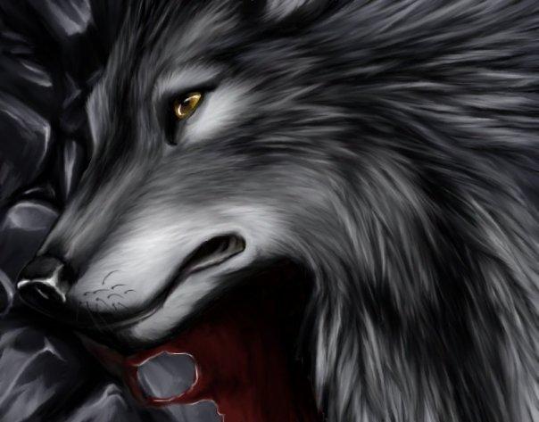 Тесты по теме волков (их много) 1270456383_2688779_c229db3