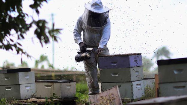 Les abeilles, témoins du bon état de notre environnement, disparaissent massivement 624_341_52b12ad080c71c971ff7bdc51f86db8c-1365687267