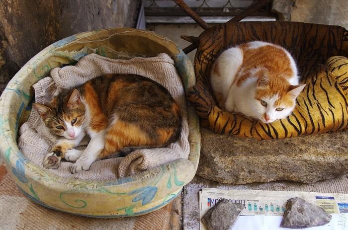 Типичный кот - Страница 4 Picturepicture_30036706136951_43315