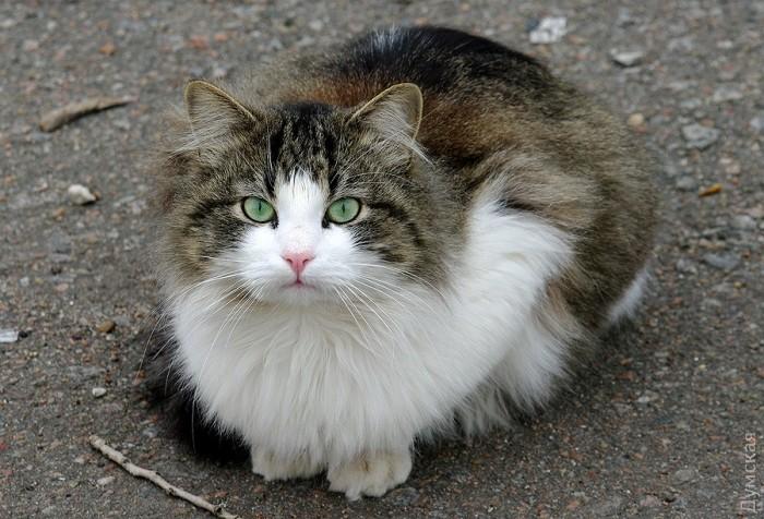 Типичный кот - Страница 4 Picturepicture_75758653136863_35016