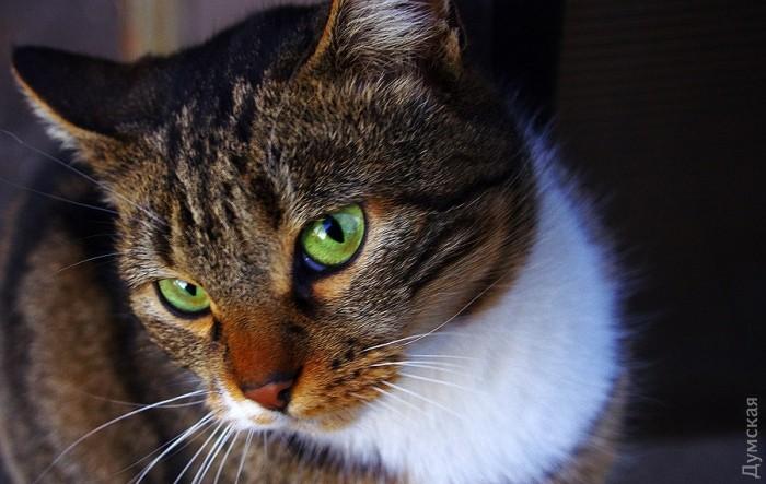 Типичный кот - Страница 4 Picturepicture_80885775136844_49925
