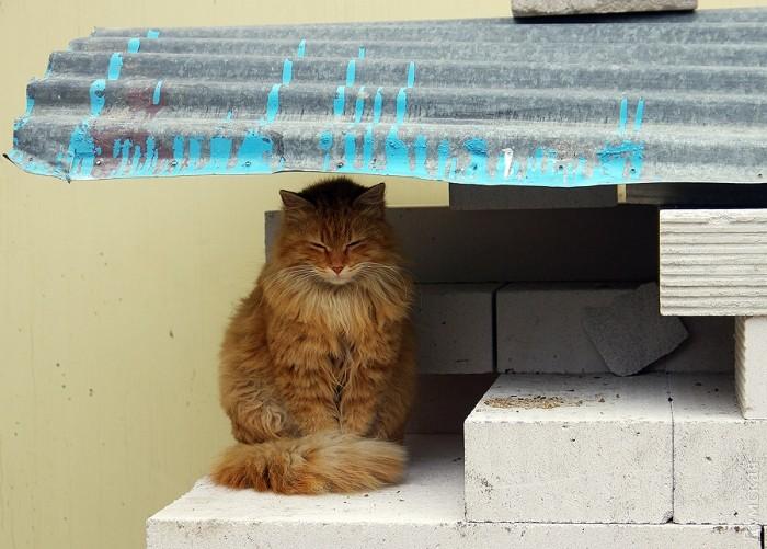 Типичный кот - Страница 4 Picturepicture_64893303136866_34077