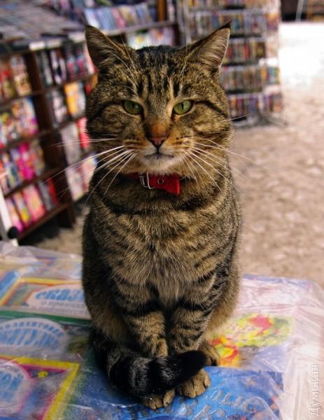 Типичный кот - Страница 4 Picturepicture_9686553136859_73144
