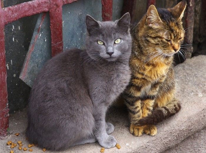 Типичный кот - Страница 4 Picturepicture_7551369136949_931