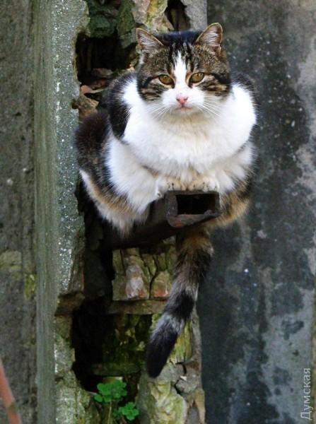 Типичный кот - Страница 4 Picturepicture_88222616136867_73609