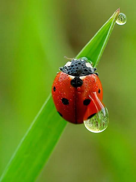 Prirodne ljepote - slike iz prirode koje ste vi uslikali i koje se Vama sviđaju s neta - Page 3 Bubamara