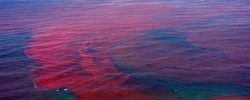 Мировой океан захватывают токсичные красные водоросли S49270596