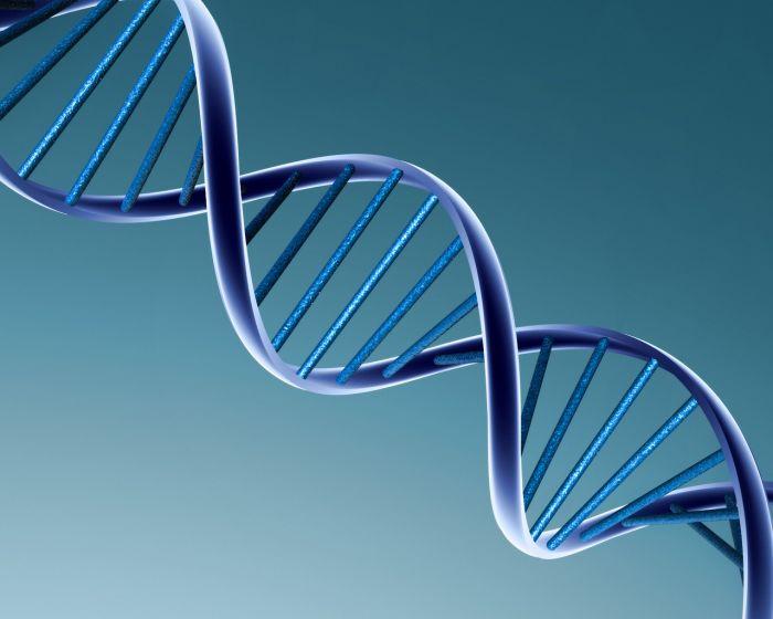 Как слова, образ и мысли влияют на ДНК. Синтез науки и духовного. ОБЗОР Fact_DNK