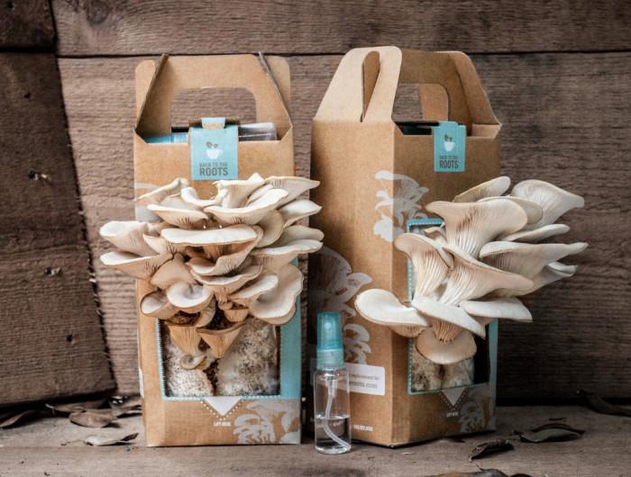 Хотите очистить организм от грибов? Перестаньте их кормить! Gribochki