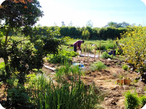 La permaculture renverse les dogmes de l'agronomie  traditionnelle Permaculture2