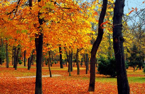 ... Y caen las hojas, llega ....¡¡¡ EL Otoño !!! Otono