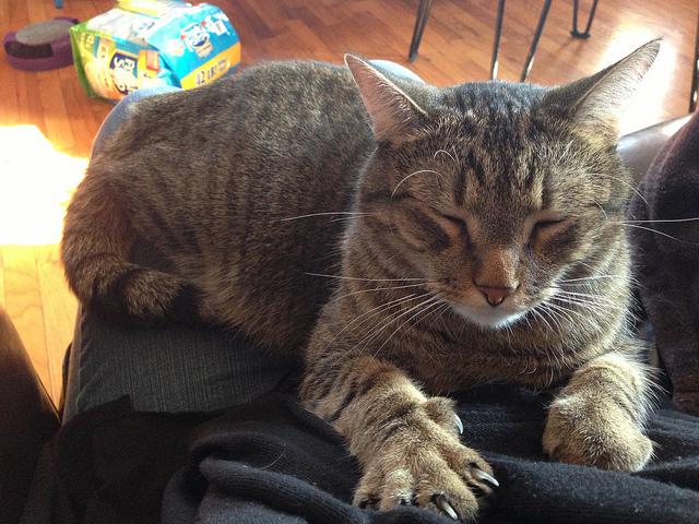 9 признаков, что ваша кошка любит Вас Original_6__econet_ru