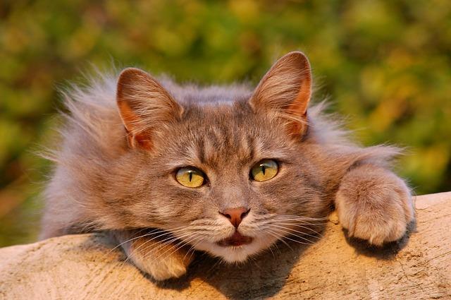 9 признаков, что ваша кошка любит Вас Original_cat-401124_640__econet_ru