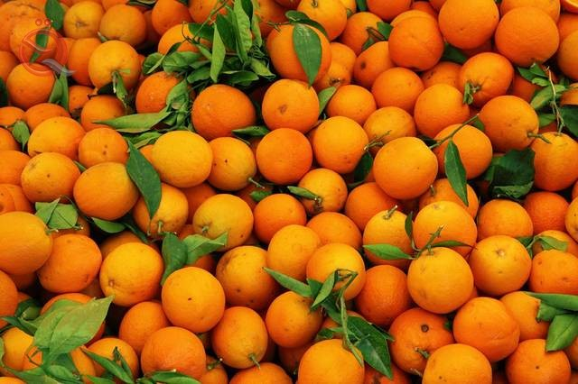 Agriculture allows the importation of oranges for lack of production locally 15129