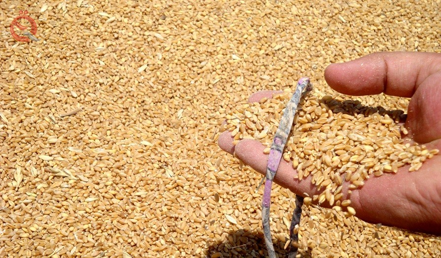 Trade: We received more than 4 million tons of wheat 16383