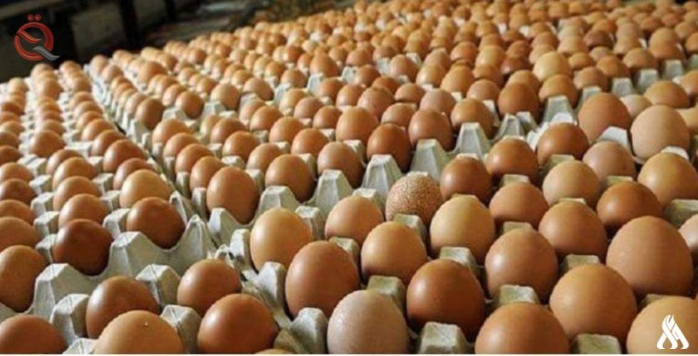 Babylon achieves the highest level of table egg production 17245