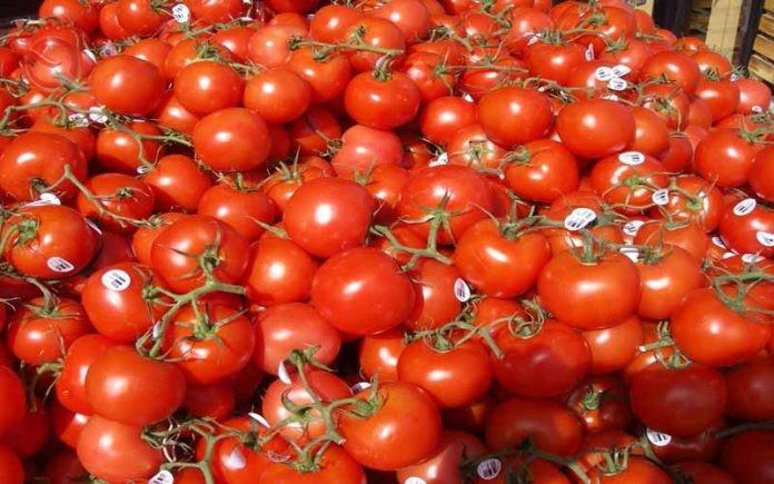 Iraq plans to export tomato and potato 18932