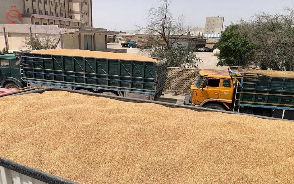 Iraq buys 311 thousand tons of local wheat within two weeks 20630