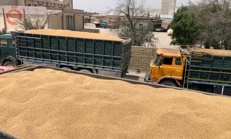 Trade: The quantities of wheat received from farmers exceeded 1,363,000 tons 20894