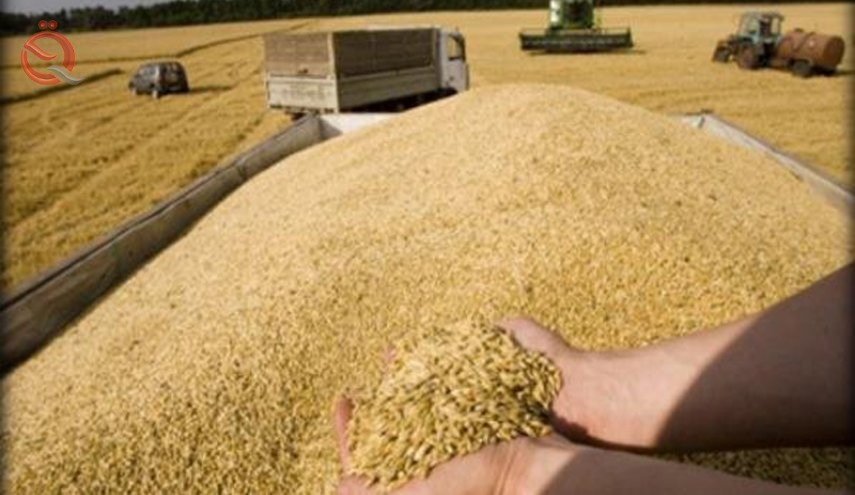 Trade announces the distribution of the first meal of dues of farmers who market wheat 21560