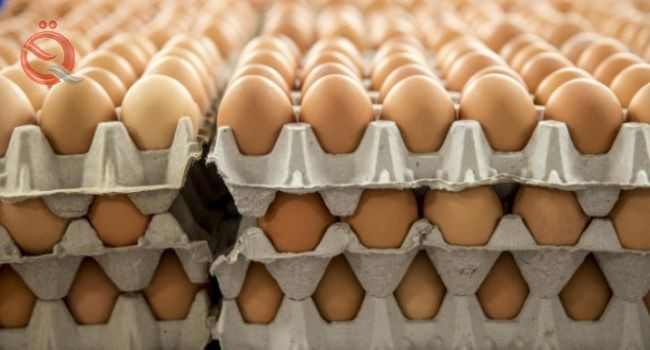Karbala markets 16 million eggs within a month and confirms the need of the local market 22070