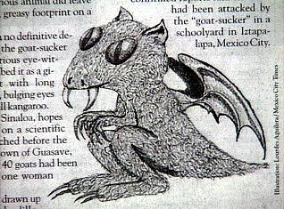 Chakadihi Goatsucker Drawing.lg