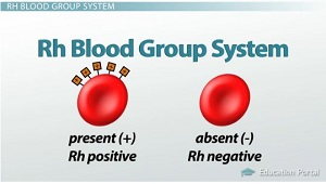 New blood type test determines blood type in 30 seconds Rh-blood-group-system