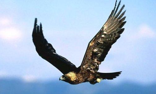 Quiero ver... - Página 9 Aguila2