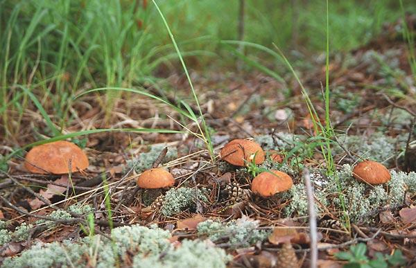 Блог-2 (фото из Интернета) Mushrooms