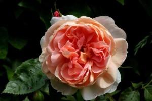 une  fleur  à trouver  - ajonc - 7 juin Bravo Martine KXvd9uLa2Ulw-fk9wyaGAMLG2SU