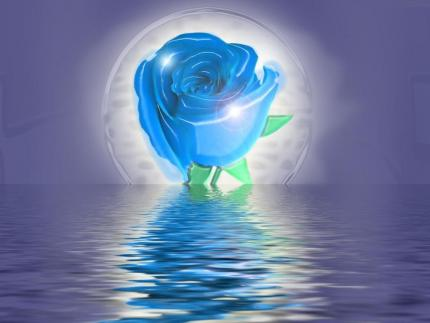 Joyeux Anniversaire Rose Bleue  WzYKZtZoWacshxFHZs87XR4v_Lo