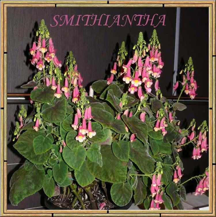 une fleur à découvrir par blucat (21juillet)trouvée par ajonc - Page 3 Z4n01QtDJ9wShX-Xga2YLNExgq0
