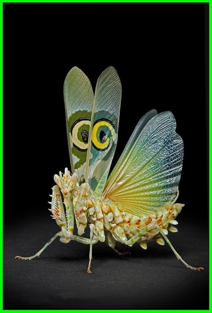un insecte à découvrir , blucat (4 août) trouvé par ajonc B2LYIgxfNobtXCL_-X2E28SfTHw