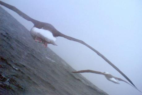 L'albatros qui prenait des photos CrOQAkepwNZkPprKqS8ecMLy8p0