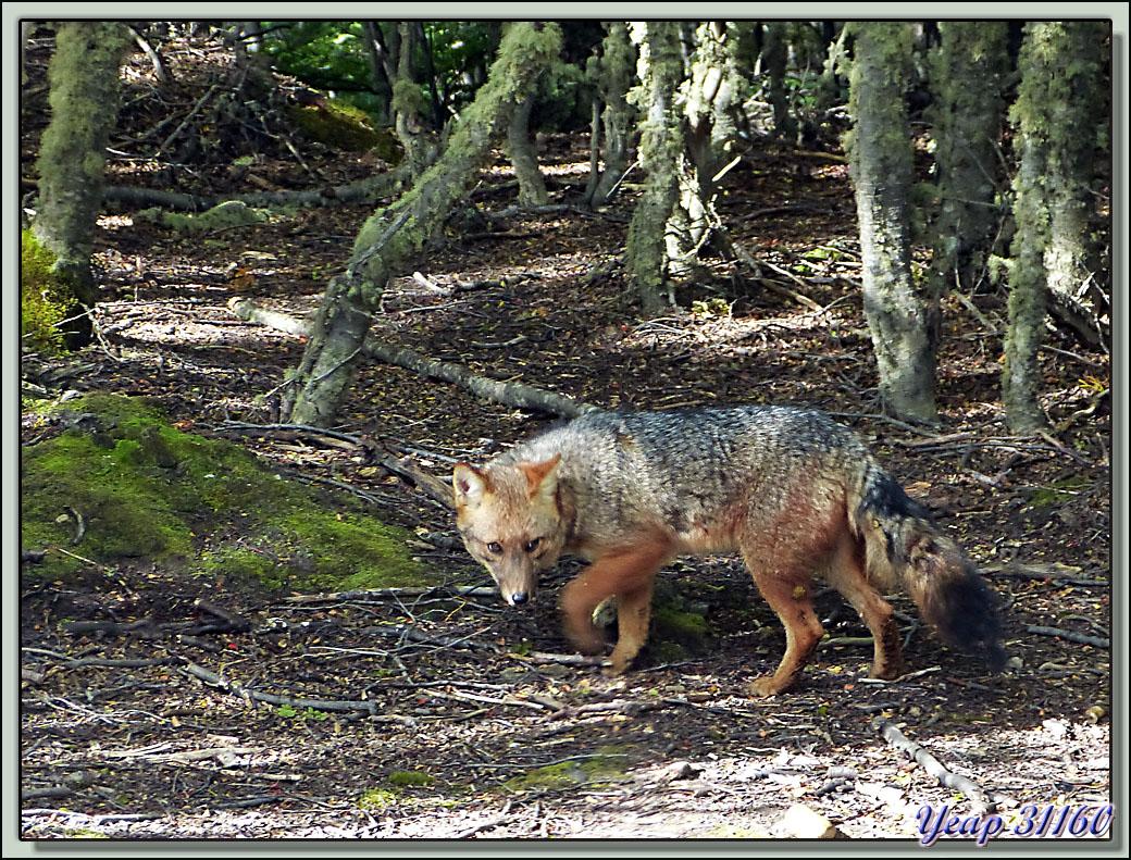un animal - ajonc - 28 juillet trouvé par Martine Mr0NSdOSxBa36ekt_I3UiwAfdww