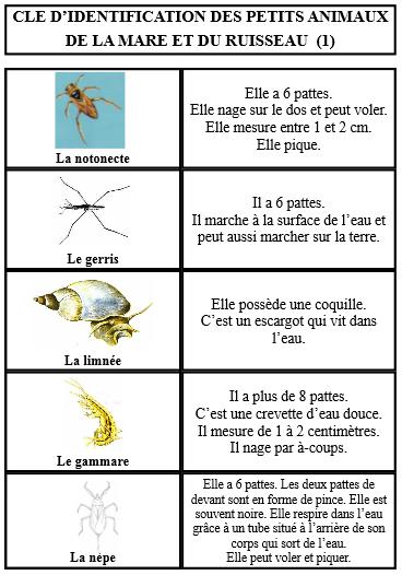 voici les poissons de la classe. - Page 2 XE8Ibr7z7PNiVanTvStUnVba-D4