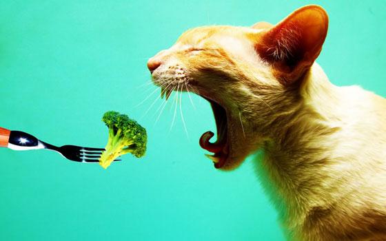 Sujet unique : Recettes Vegan pour tous ! - Page 2 Chat-v%C3%A9g%C3%A9tarien