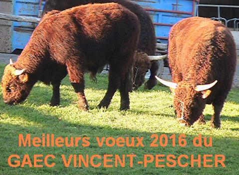 Vaches et Elevage Salers en Livradois - Page 2 Meilleurs_voeux2016