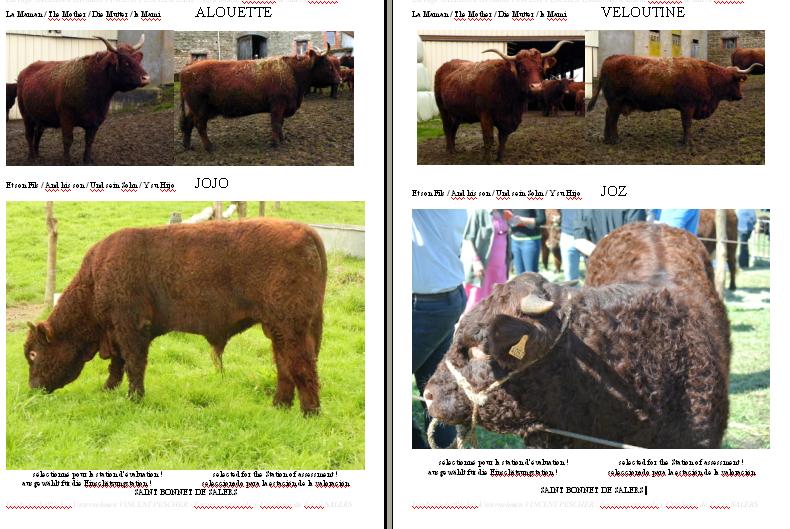 Vaches et Elevage Salers en Livradois - Page 2 Veaux_station_2015